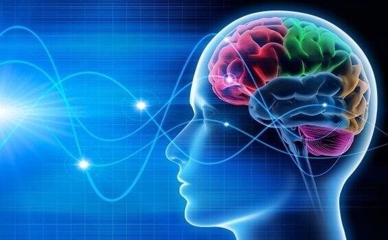 脳波:デルタ、シータ、アルファ、ガンマ