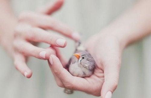 手の中の鳥