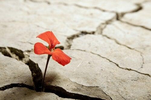割れ目に咲く花