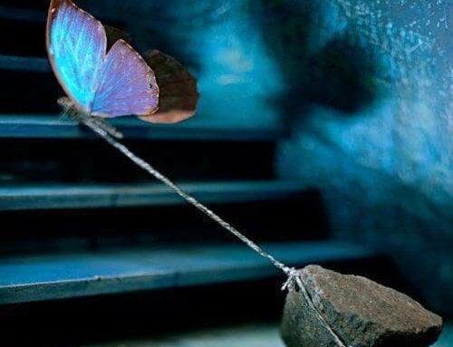 蝶が石を引っ張る