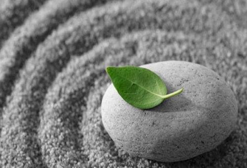 石の上にある葉