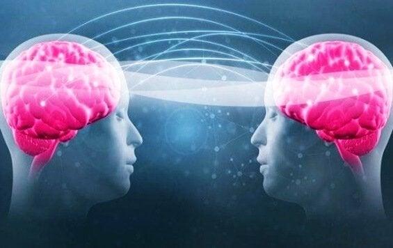 トリプトファンとセロトニン:なぜこれらが健康へつながるのか