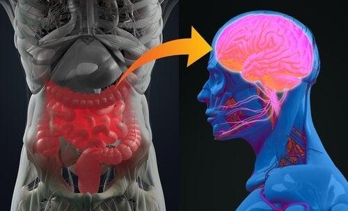 細菌ー腸ー脳