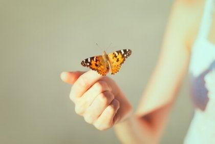 手の先に蝶