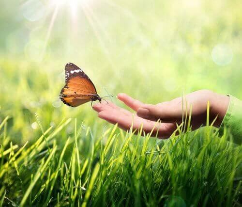手のひらの蝶