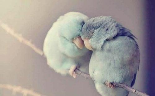 寄り添う2羽の鳥