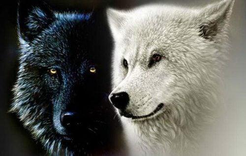 チェロキー族の2匹のオオカミの伝説