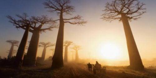 バオバブと太陽
