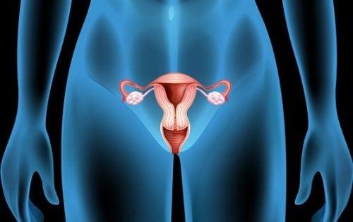 卵巣嚢腫:症状、原因、治療