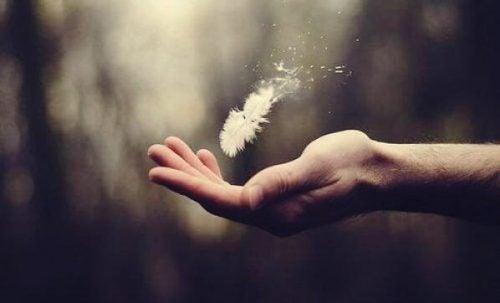 手の平に落ちる羽