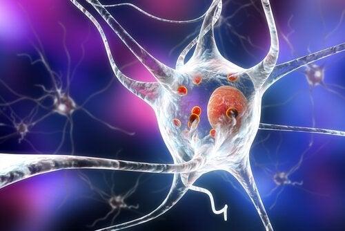 ニューロンへの影響