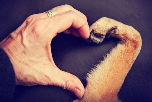ペットの死との向き合い方