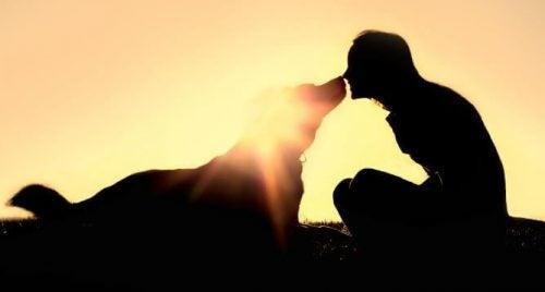ペットと太陽