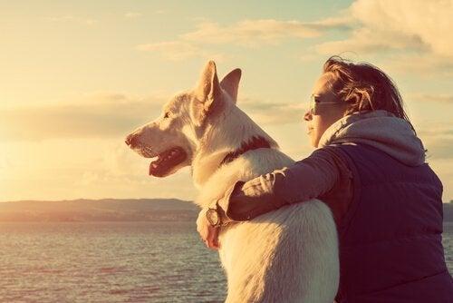 ペットと海