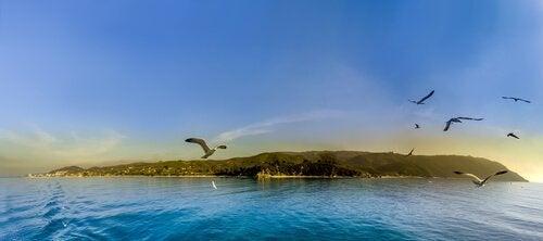 島の上を飛ぶカモメ
