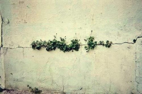 割れ目から生える草