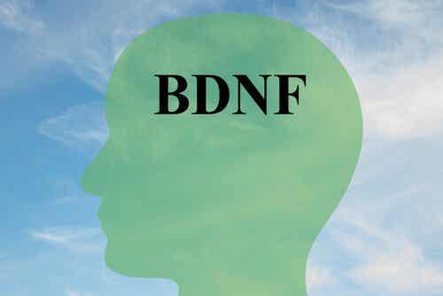 脳由来神経栄養因子:健康的な脳組織のためのプロテイン