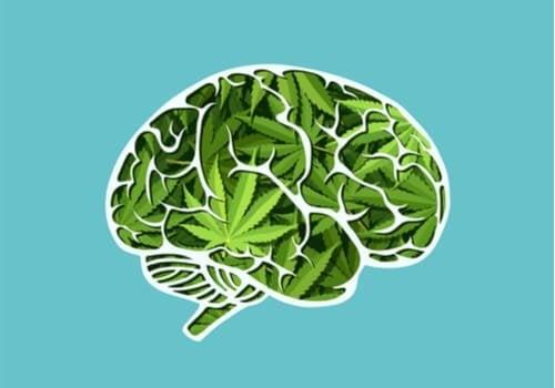 大麻の脳への長期的影響