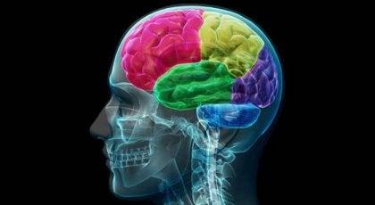 中毒者の脳:衝動とニーズの解剖学