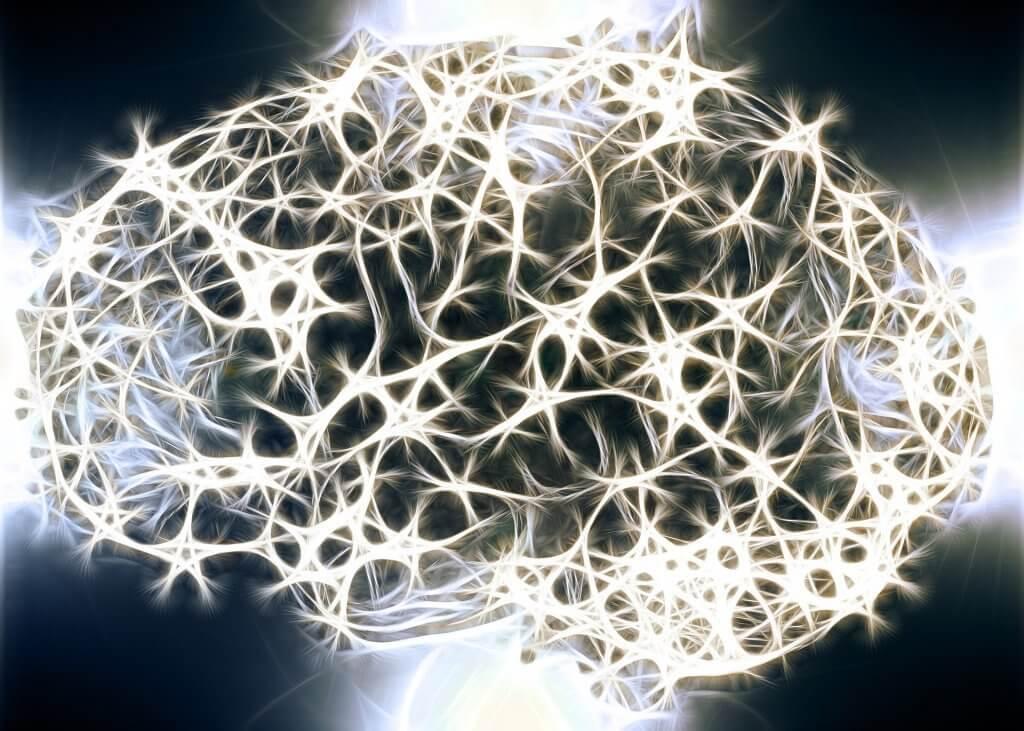 神経システムの白質が重要な理由