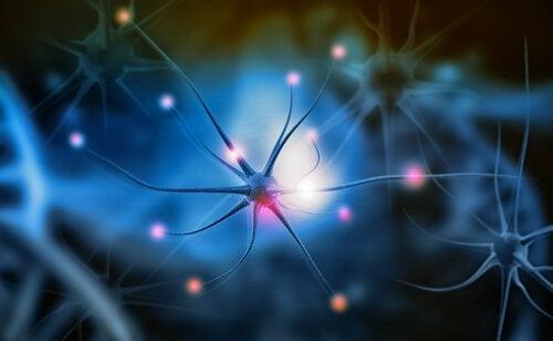 神経発生とは?なぜ重要なのか?