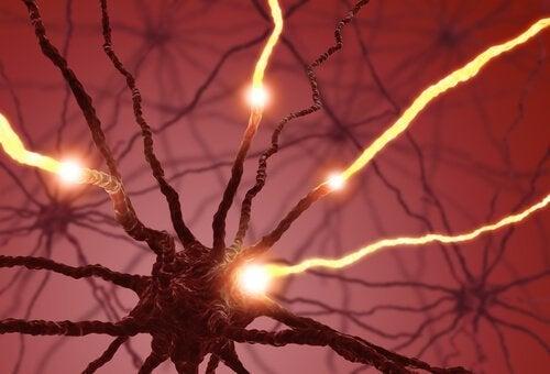 神経発生と電位