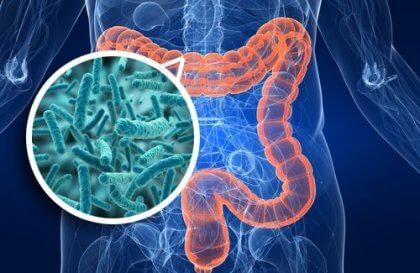 腸内細菌と感情