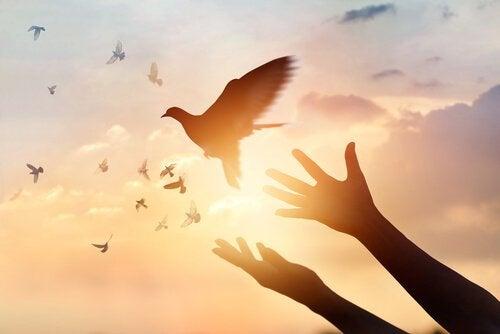 解放される鳥