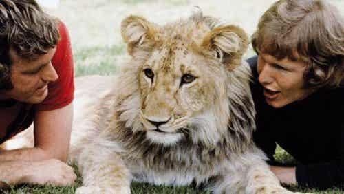 ライオンのクリスチャンの心温まる物語