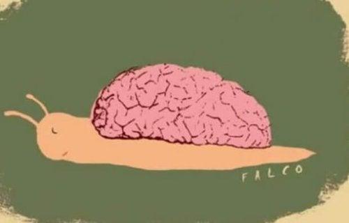 脳を背負うカタツムリ