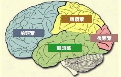 脳葉:その特徴と機能