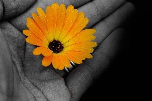 手のひらの黄色い花