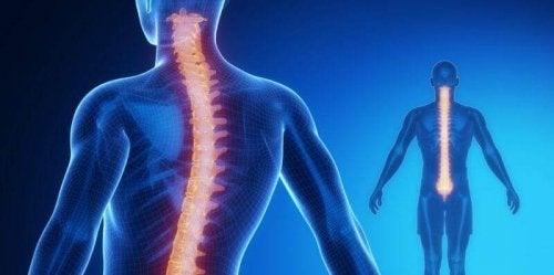 脊髄:その構造と生理機能