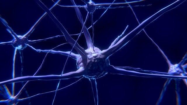 ニューロン:その正体と働き