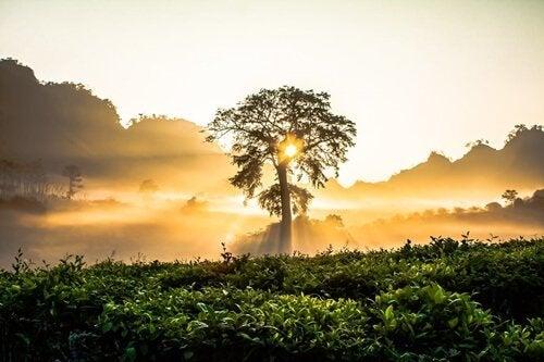 木の向こうに昇る朝日