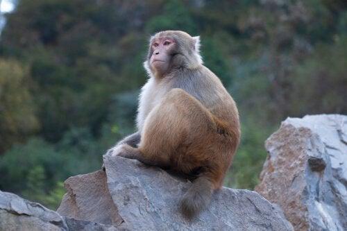 動物の意識:自分たちの苦しみを意識するか