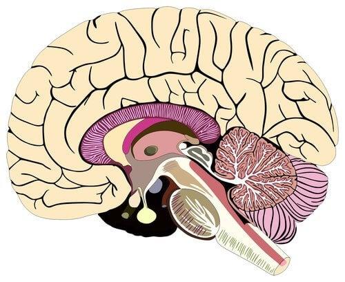 髄膜 構造 機能