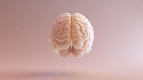 神経科学 歴史