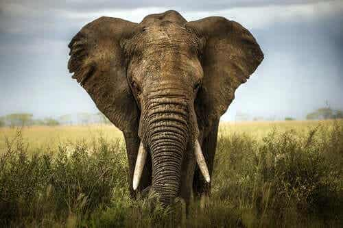6人の盲目の賢者とゾウ:人の意見に耳を傾けること