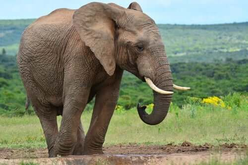 6人の盲目の賢者 ゾウ 人の意見 耳を傾ける