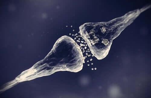 シナプスの種類 化学シナプス 電気シナプス