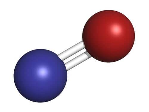 気体の神経伝達物質:一酸化窒素の働き