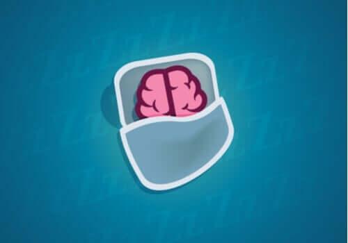 眠っている間にニューロンでは何が起こっているのか