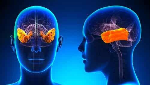 クリューヴァー・ビューシー症候群:恐怖心を失う病