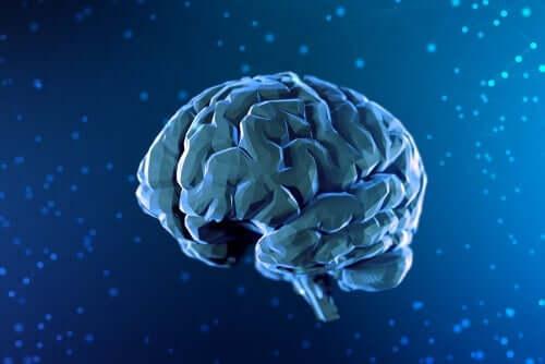 人間 後脳 構造 機能