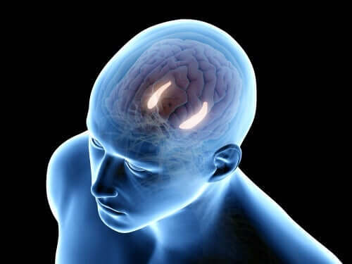 重要な脳領域 海馬体 構造 機能