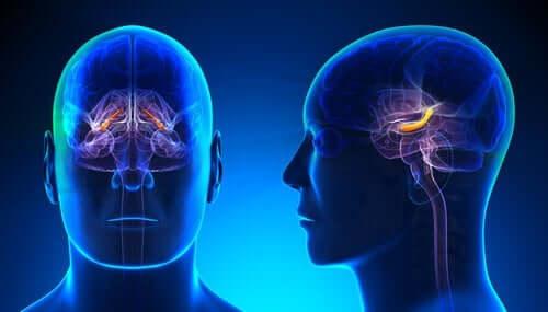 重要な脳領域である海馬体:構造と機能