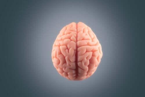 死の直前に私たちの脳に起こること