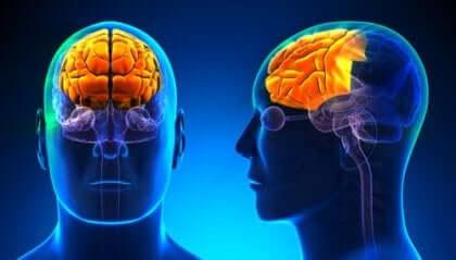 遂行機能障害 前頭葉