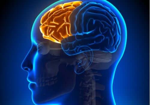 遂行機能障害の影響:前頭葉が機能しないとき